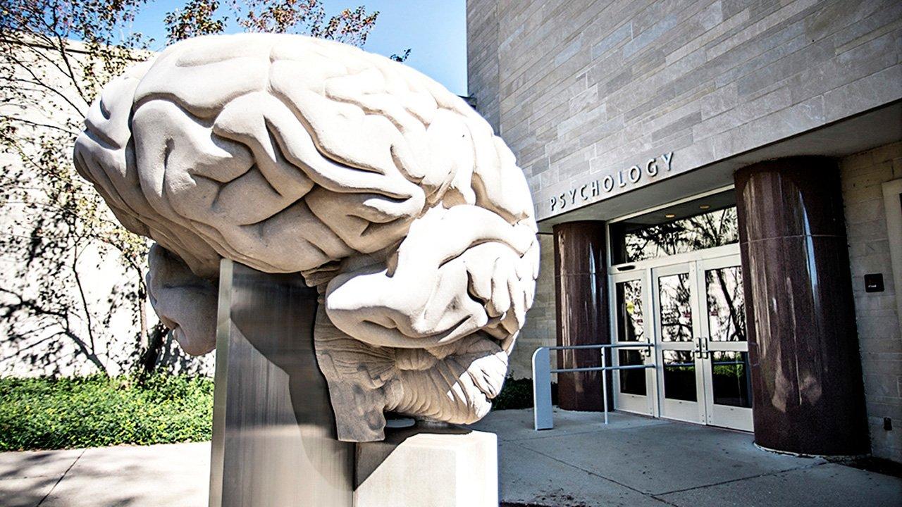 Limestone Brain