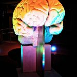 Limestone Brain Sculpture